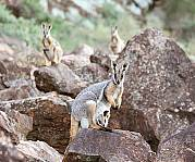 5 Day Flinders Ranges & Outback Inc Arkaroola (4nts Standard Motel Unit - Solo Traveller)