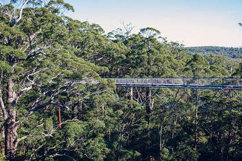 'Valley Of the Giants' tree top walk