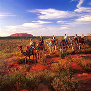 camel tours at ayers rock