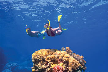 2 Day Reef & Rainforest Package