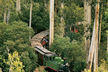 Puffing Billy through the forest