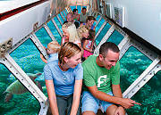 Cairns tours - green island Sub Interior