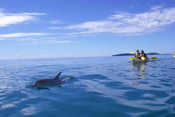 Wild Dolphins kayaking