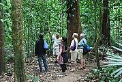 Rainforest walks witha naturalist guide.