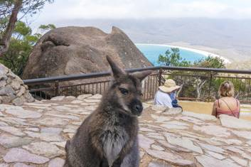 Wineglass Bay lookout local