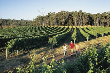 Explore a winery