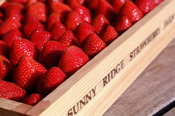 Sunny Ridge Strawberries in a box