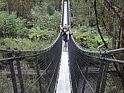 Swinging Bridge at Tahune Airwalk