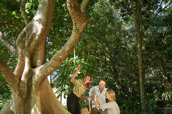General Admission + Indigenous Guided Bush Food Trail with Transfers - (Cairns City & Northern Beaches)