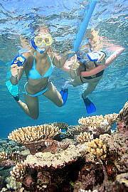 Snorkelling at Opal Reef