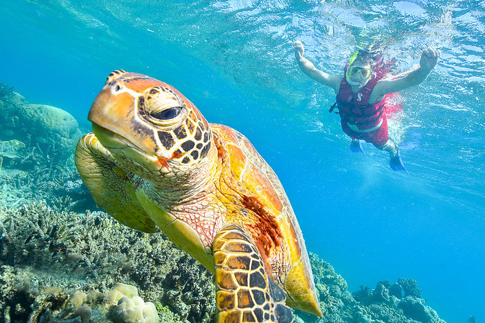 Close encounter with a Turtle on Arlington Reef