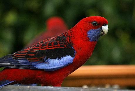 Rainforest Birds Flying Road  amp Rainforest Tour