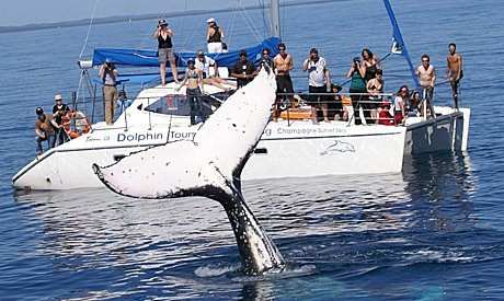 Australia's best whale watch experience