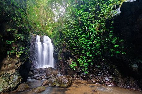 how to go tout tamborine rainforest