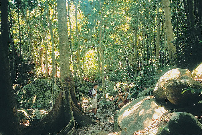 Rainforest on Fitzroy island