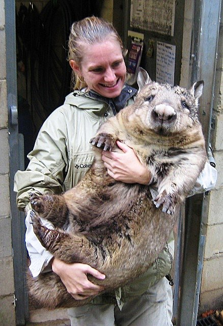 Megs is Australian Day Tours/JPT Tours' sponsored wombat