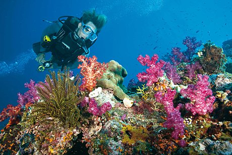 Enjoy up to 3 certified dives and intro diving