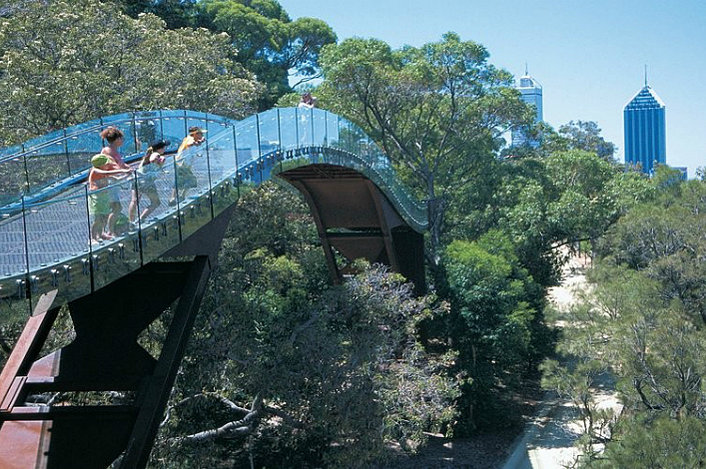 Walk among the tree tops in Kings Park.