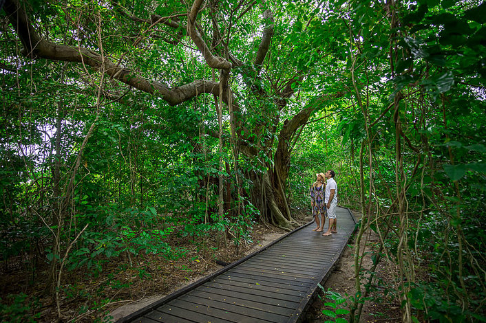 Discover with a self-guided rainforest walk