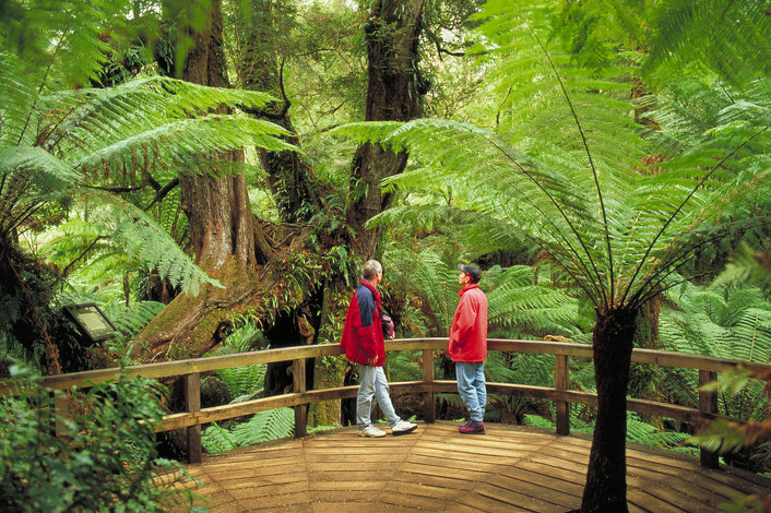 Explore the ancient wonders of the Great Otway National Park