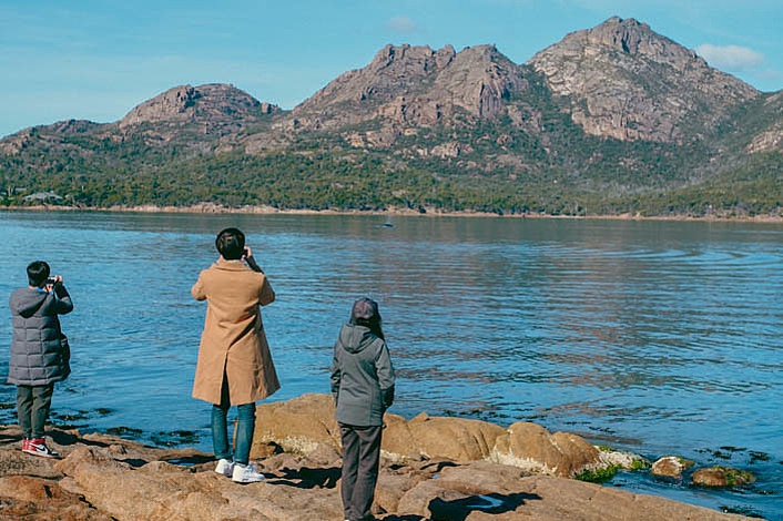 Whale watching is easy at Freycinet