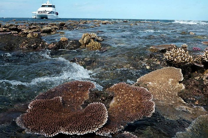 Hastings Reef