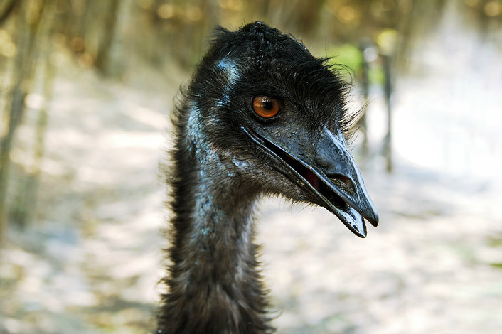 Meet an emu & hand-feed them if you dare!