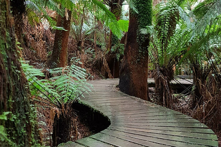 Ancient Cape Otway Rainforest