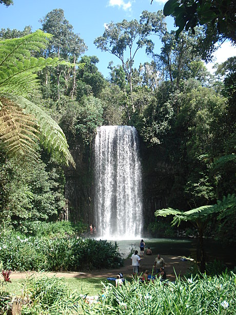 Take a dip under the region's most famous waterfall- Millaa Millaa falls