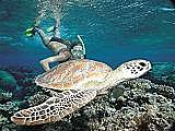 snorkel with turtles every day