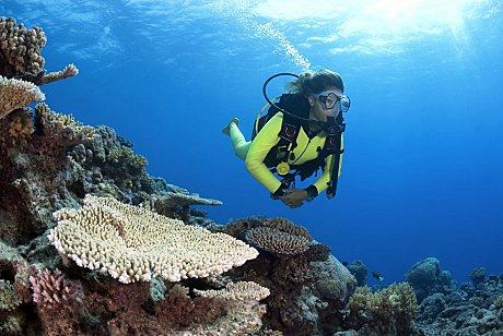 Diving at the outer reef