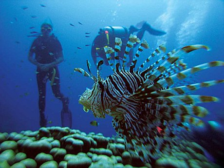 Kiana - Scuba Diving Outer Reef and Islands