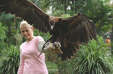 See powerful Birds of Prey