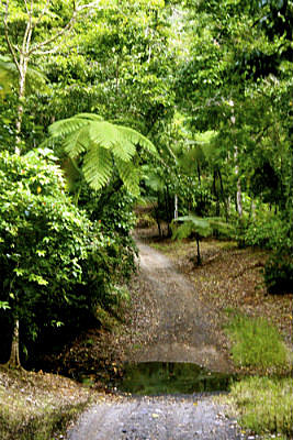 Amazing rainforest tracks