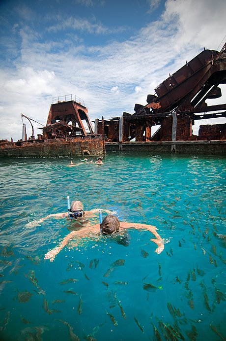 Snorkel the Tangalooma Wrecks!