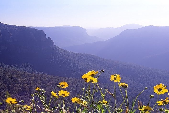 Flowers and the Blue Mountains