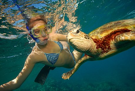 Snorkelling with a Turtle at Arlington reef near Cairns