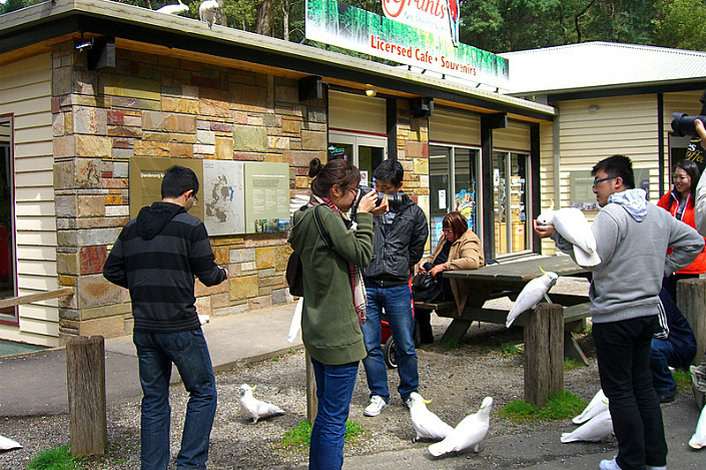 Bird feeding at Grants Reserve