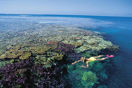 Snorkeling - Great Barrier Reef