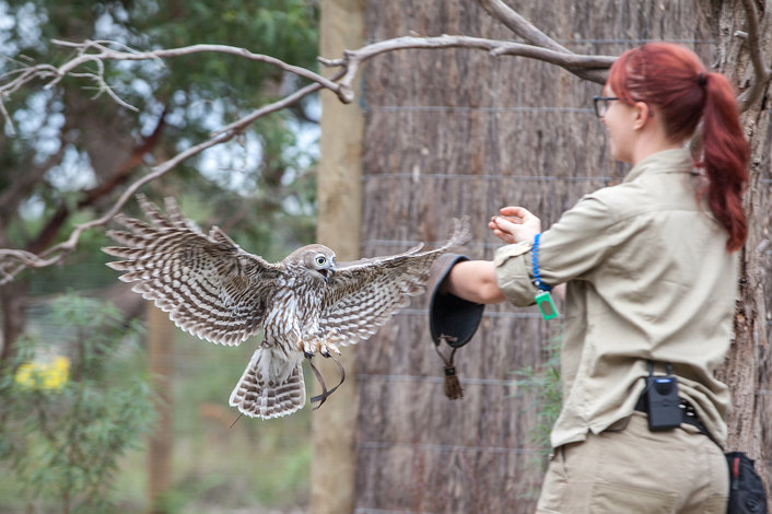 The Conservation in Action Show at Moonlit Sanctuary