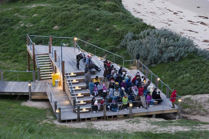 Penguin Island Tour Price