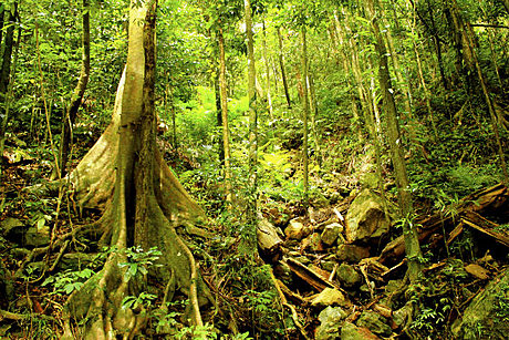 World Heritage Rainforest