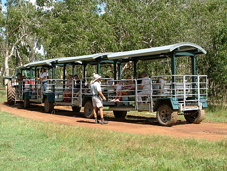 Wagon train tour through melaleuca forest