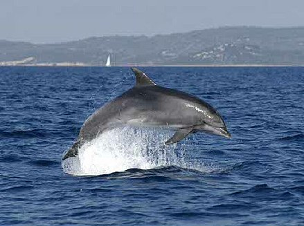 See dolphins in the wild
