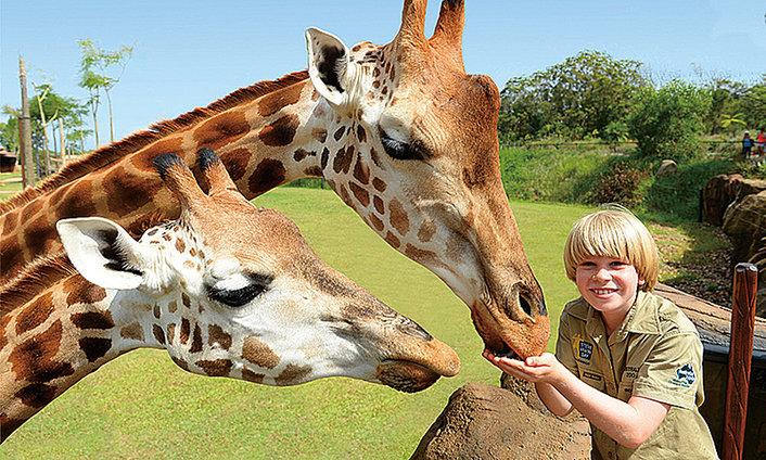 Australia Zoo Hospital Tour
