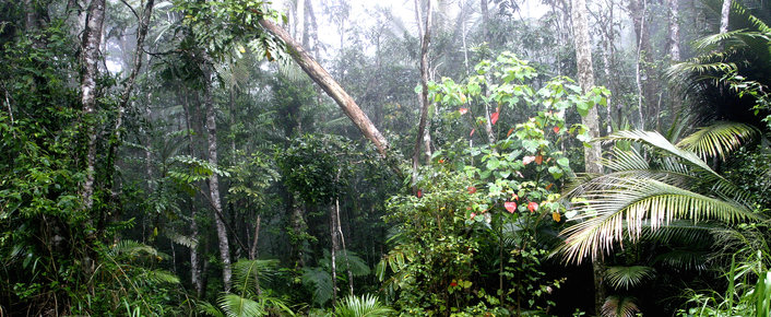 Lush Rainforest
