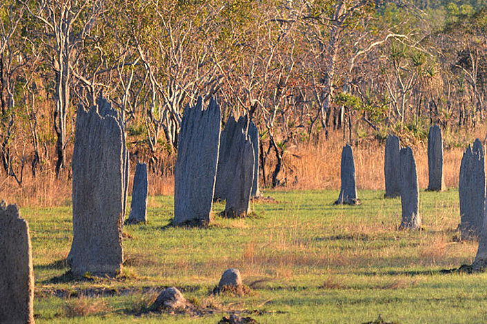 Litchfield National Park - Magnetic Termite Mounds