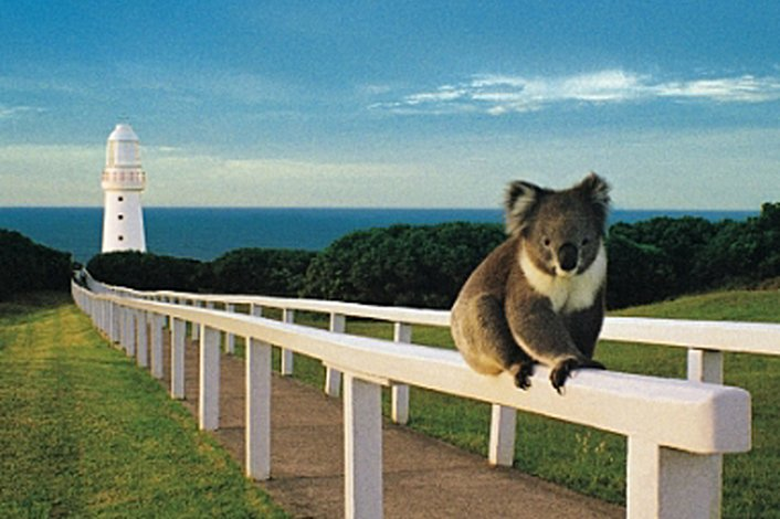 Koala & SpiltPoint Lighthouse