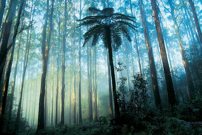 Dandenong Rainforest