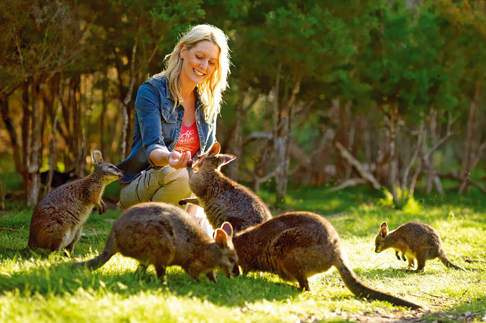 Feed the cute wallies on the Wallaby Walk